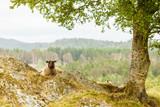 Sheeps on rock hill - 221220766