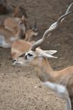 beautiful and cute deer - 221221195