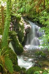 New Zealand jungle falls