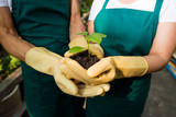 Gardeners in rubber gloves holding growing plant sprout together - 221237747