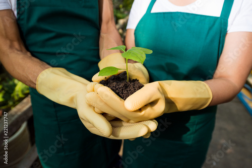 Gardeners in rubber gloves holding growing plant sprout together