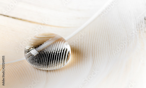 Large water drop on the feather closeup macro background - 221264155