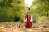 Geige im Park im Herbst - 221266165