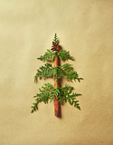 Christmas Tree made from Evergreen and Cinnamon Stick on brown paper. Christmas symbol - 221271135