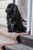 rustic sad dog sitting near the house - 221271767