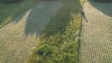 Farm tractor haymaking cut hay grass in evening, aerial  - 221291726