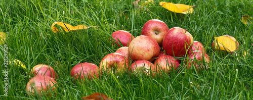 Fototapeta Heap of red apples in the garden
