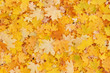 abstract autumnal background: colorful foliage on ground in park