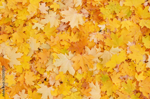 Fototapeta abstract autumnal background: colorful foliage on ground in park
