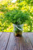 dill stands on a green natural background  - 221304554