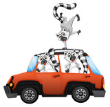 Lemur in a car on white backgroubd - 221313927
