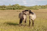 beautiful wild horses graze in grasslands - 221319787