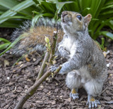 squirrel on a tree - 221324907