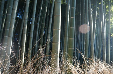 Bambuswald © Kristina Charles
