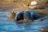 Grey Seals & Pups - 221337567