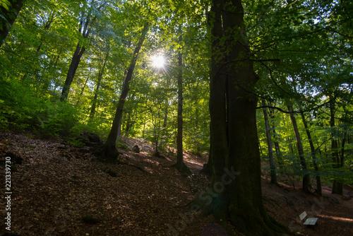 Foto Murales Teutoburger Wald in Ostwestfalen