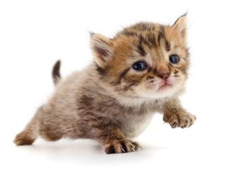 Kitten on white background.