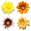 Four flowers isolated on white background