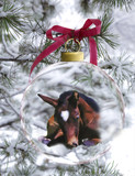 Newborn Foal in Holiday Ornament - 221352330