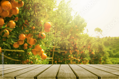 Fototapeta wooden table place and orange trees with fruits in sun light