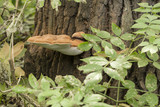 Parasitic sponge on the trunk of a tree spraying seeds. - 221384709
