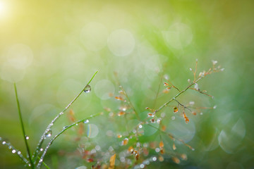 Water drop on grass, bokeh And the sun after the rain.