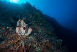 Deep Wall Dive in Atauro Island - Timor-Leste