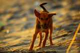 Lonely puppy on the beach - 221397917