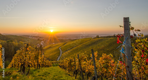 Leinwandbild Motiv Weinberge im goldenen Licht im Sonnenuntergang Offenburg Schwarzwald