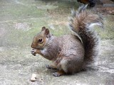 Squirrel and the nut - 221414975