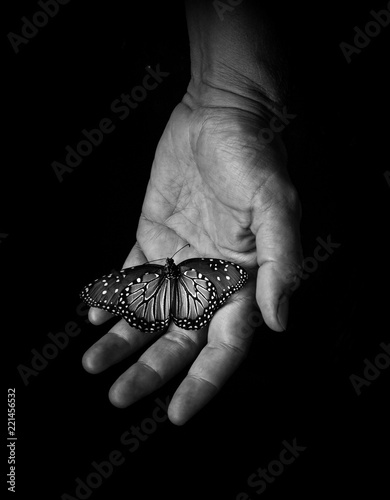 Black and white butterfly in hand