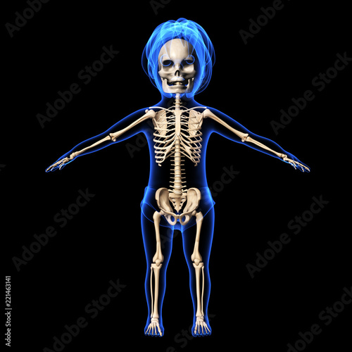 3d Render Of Human Boy Skeleton Anatomy Buy Photos Ap Images