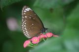 Papillon marron et fleurs roses