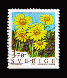 Alpine arnica (yellow flowers) and crowberry, Mountain Flowers serie, circa 1995 - 221477964