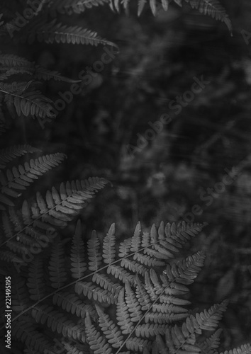 Black and white forest - 221495195