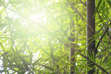 bamboo leaf in bright sunlight background
