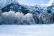 a beautiful snowy winter