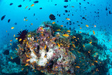 Beautiful colorful coral reef and tropical fish underwater in Maldives - 221544562