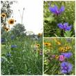 canvas print picture - Fleurs de champs, jardin sauvage