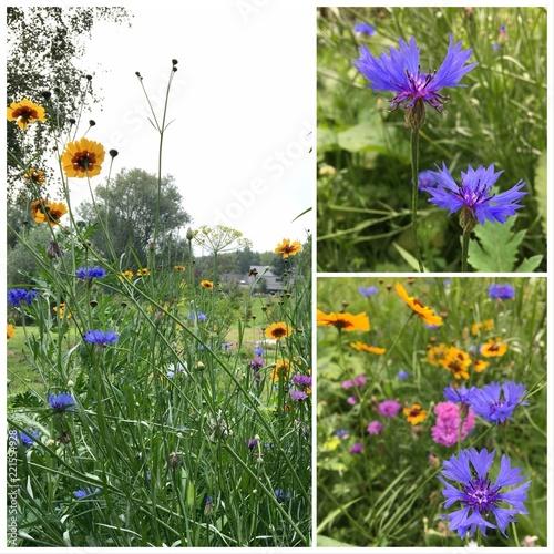 canvas print picture Fleurs de champs, jardin sauvage