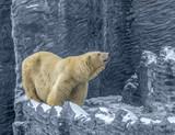 Polar bear - 221557952