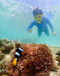 snorkeling on island in the Thailand Ocean.
