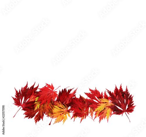 Leinwanddruck Bild Autumn leaves, Herbst, Blätter, Herbstlaub, Bordüre, freigestellt, isoliert, Textraum, Textfläche,