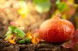 Leinwanddruck Bild - Ripe pumpkin