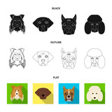 Muzzle of different breeds of dogs.Collie breed dog, lobladore, poodle, boxer set collection icons in cartoon style vector symbol stock illustration web. - 221600126