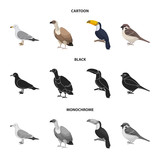 Gull, toucan and other species. Birds set collection icons in cartoon,black,monochrome style vector symbol stock illustration web. - 221600958