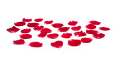 rose petals isolated - 221618779