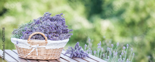 Harvesting of lavender. A basket filled with purple flowers stands on a wooden table on a background of green lavender fields. © Kotkoa