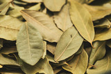 Dry bay leaves as a background - 221664132