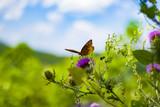 Butterfly On Milk Thistle Flower  In Blue Ridge Mountains